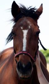 horse 1 a